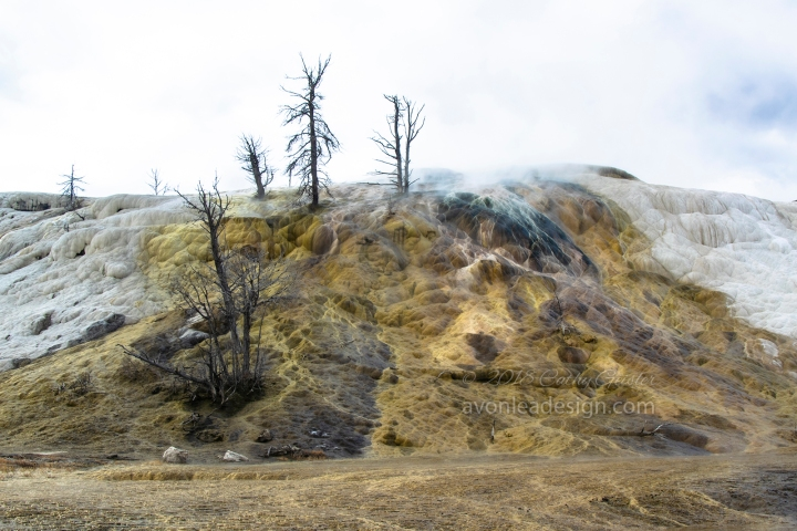 20181030YellowstoneDSC_5409 2 copy